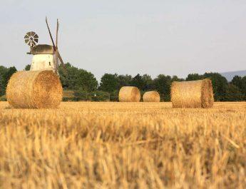 Meine Landwirtschaft