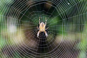 spider-1195429_640