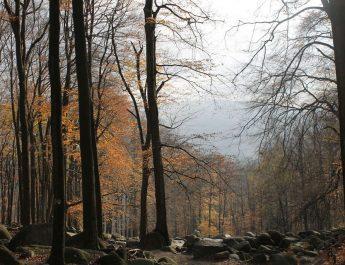 Waldbesitzer