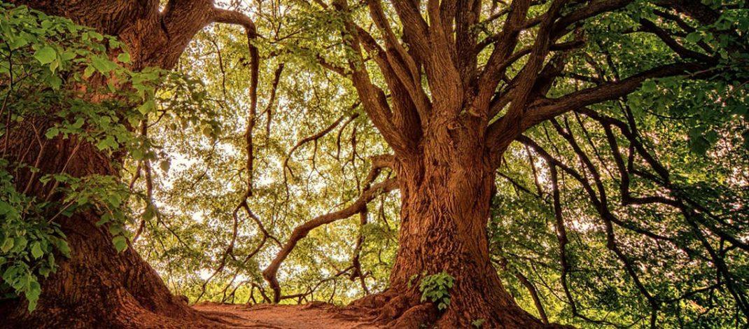 Peter Wohlleben: Windräder gehören nicht in Wälder