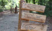 Gewalt im Hambacher Forst